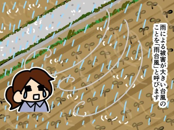 漫画「跡取りまごの百姓日記」【第65話】「雨台風」と病害注意報