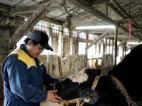手に職をつけたい人必見! 酪農のプロを育てる「JAてしお」とは?