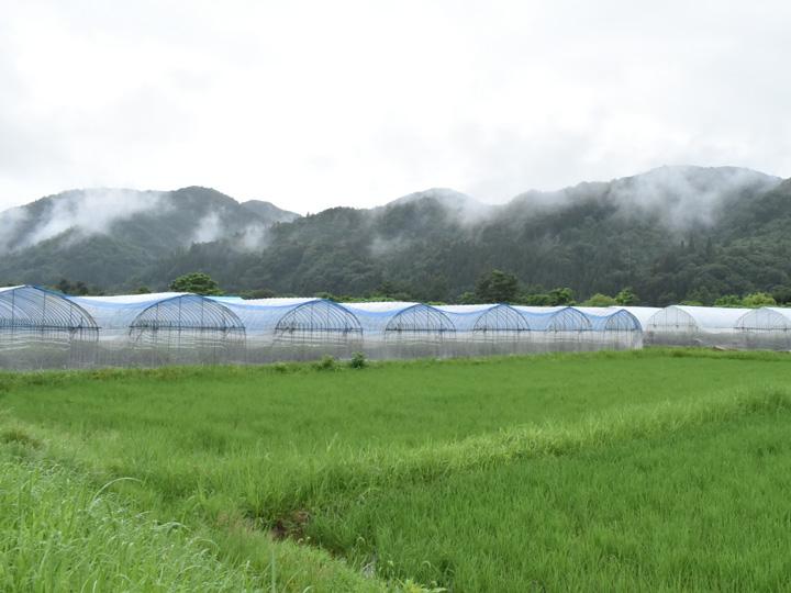 福島県南会津郡『株式会社とまっteファーム』のトマトハウス