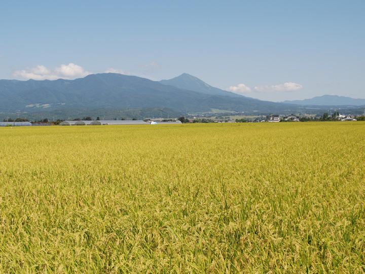 美味しいお米の産地として県内外でも高評価の福島県湯川村