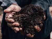 牛ふん堆肥とは? どのような効果がある? 正しい使い方や注意点、選び方などについて【畑は小さな大自然vol.85】