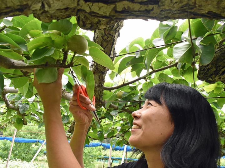 山形県上山市の自身の農園で摘果作業を行う鈴木さんは、終始笑顔が絶えませんでした