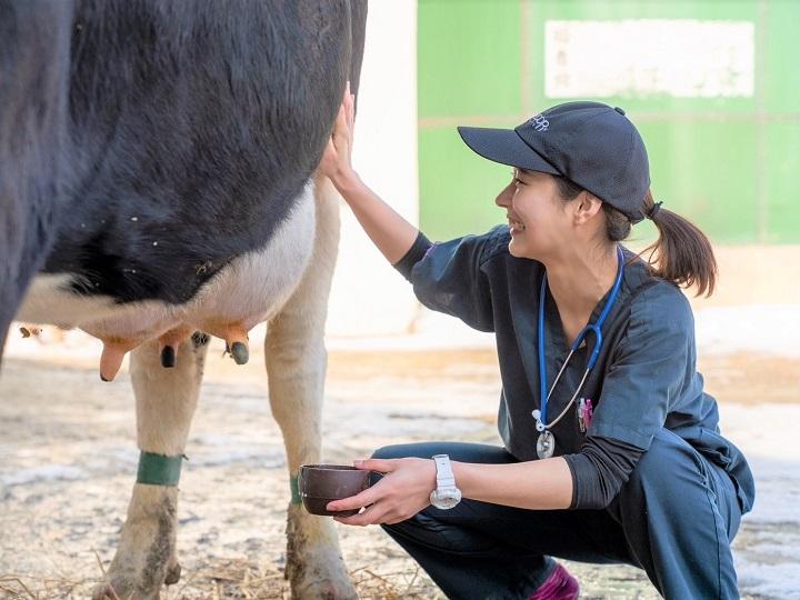 ミスコン優勝者は獣医の卵 「週4回の搾乳アルバイト」が人生を変えた