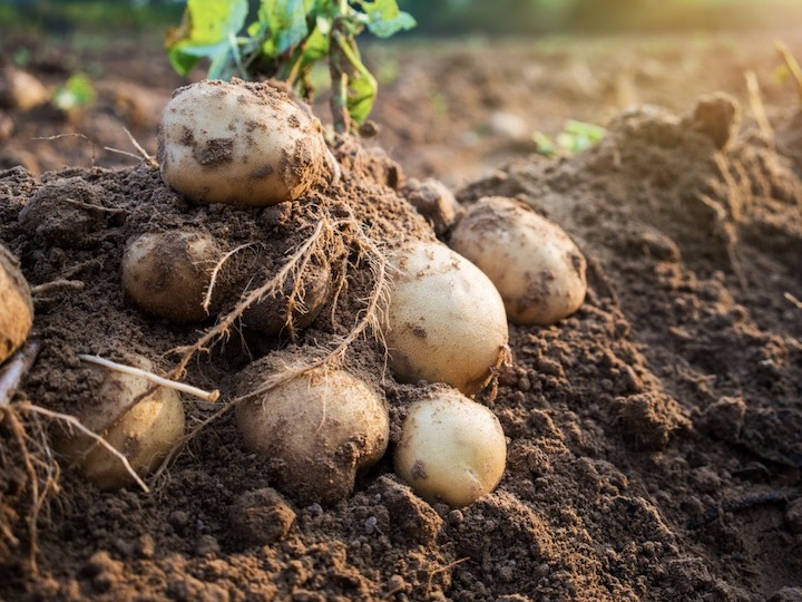 家庭菜園初心者にオススメ! 8月に植える野菜5選【畑は小さな大自然vol.86】