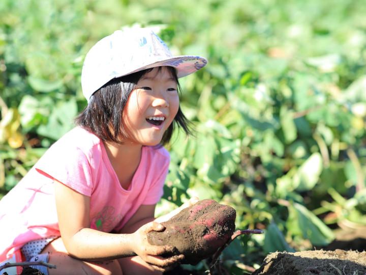 """サツマイモの魅力とは。""""ほくほくorねっとり""""だけじゃない品種の選択肢"""