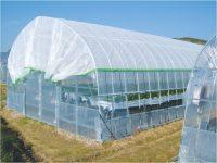 農業、家庭菜園に役立つ! おすすめ遮光・遮熱用ネット7選