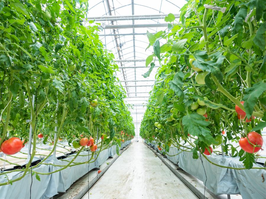 施設園芸での安定した農業生産をサポート―省力化や自動化に取り組むヤンマーグリーンシステム