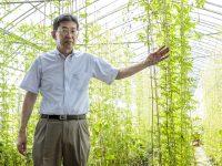 すきま時間で副収入をゲット! 屋上・壁面緑化用植物の生産協力農家を募集中