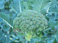 温暖な農業好適地で、これからの農業を学ぶ!  福島県南相馬市で農業体験をしてみませんか。