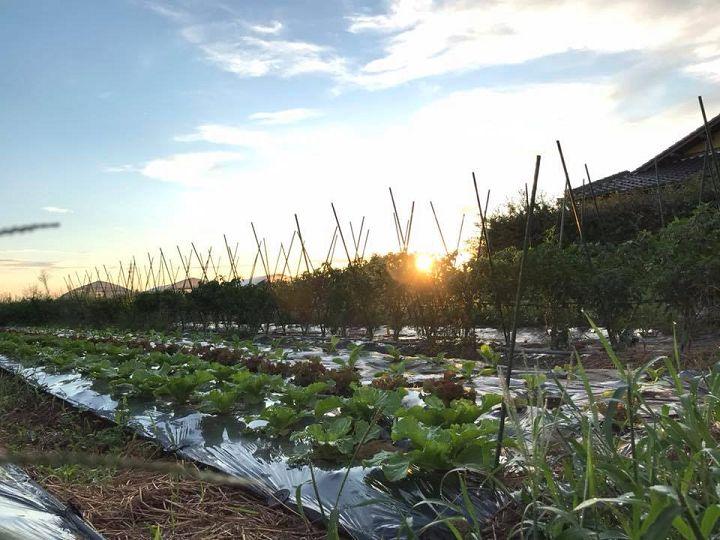 「農家のため」の6次産業化【ゼロからはじめる独立農家#13】