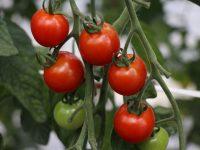 農家に聞く、土壌改良材で作物をうまく育てる方法!