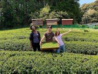 世界の若者が「お茶の武者修行」に 過疎の村と世界をつなぐインターン