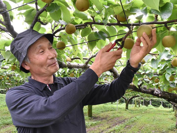 収穫適期の見分け方から、収穫の仕方まで丁寧に教えますのでぜひ収穫を楽しんでみてください