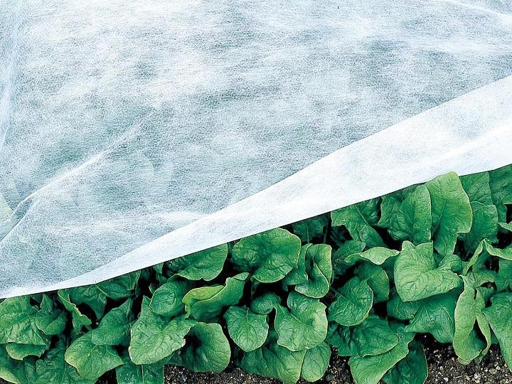 【プロに聞く】ホウレンソウの栽培方法とおすすめ品種 発芽をそろえるポイントは?