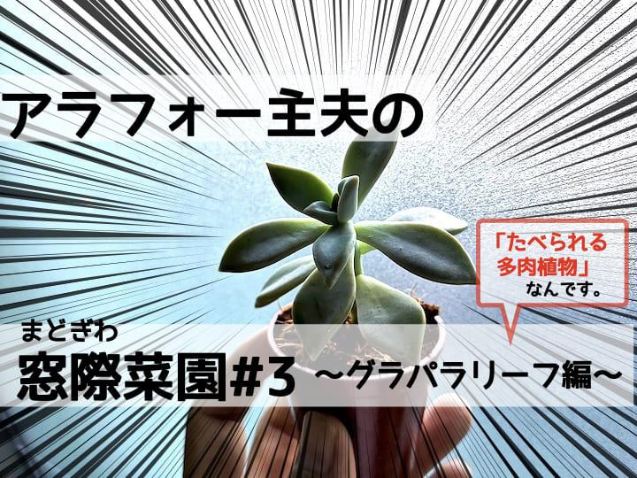 多肉植物を育ててみたい!なら食べられる「グラパラリーフ」に挑戦‼