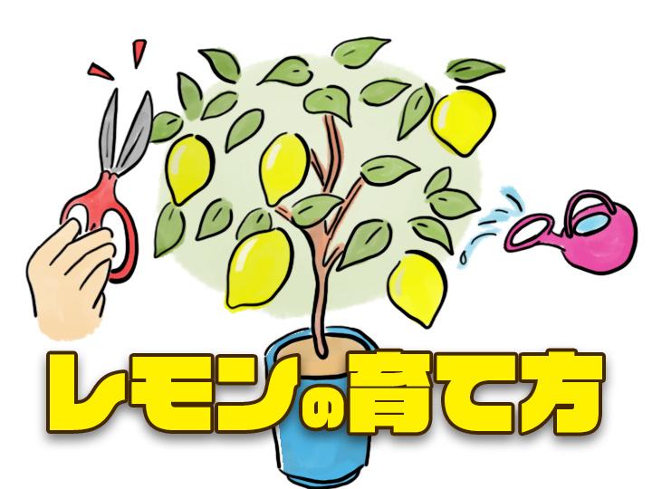 農家が教えるレモンの育て方 虫・鳥獣害に強い? 実は簡単な家庭果樹