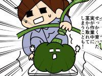 漫画「跡取りまごの百姓日記」【第70話】根元足元要注意!? カボチャの玉直し