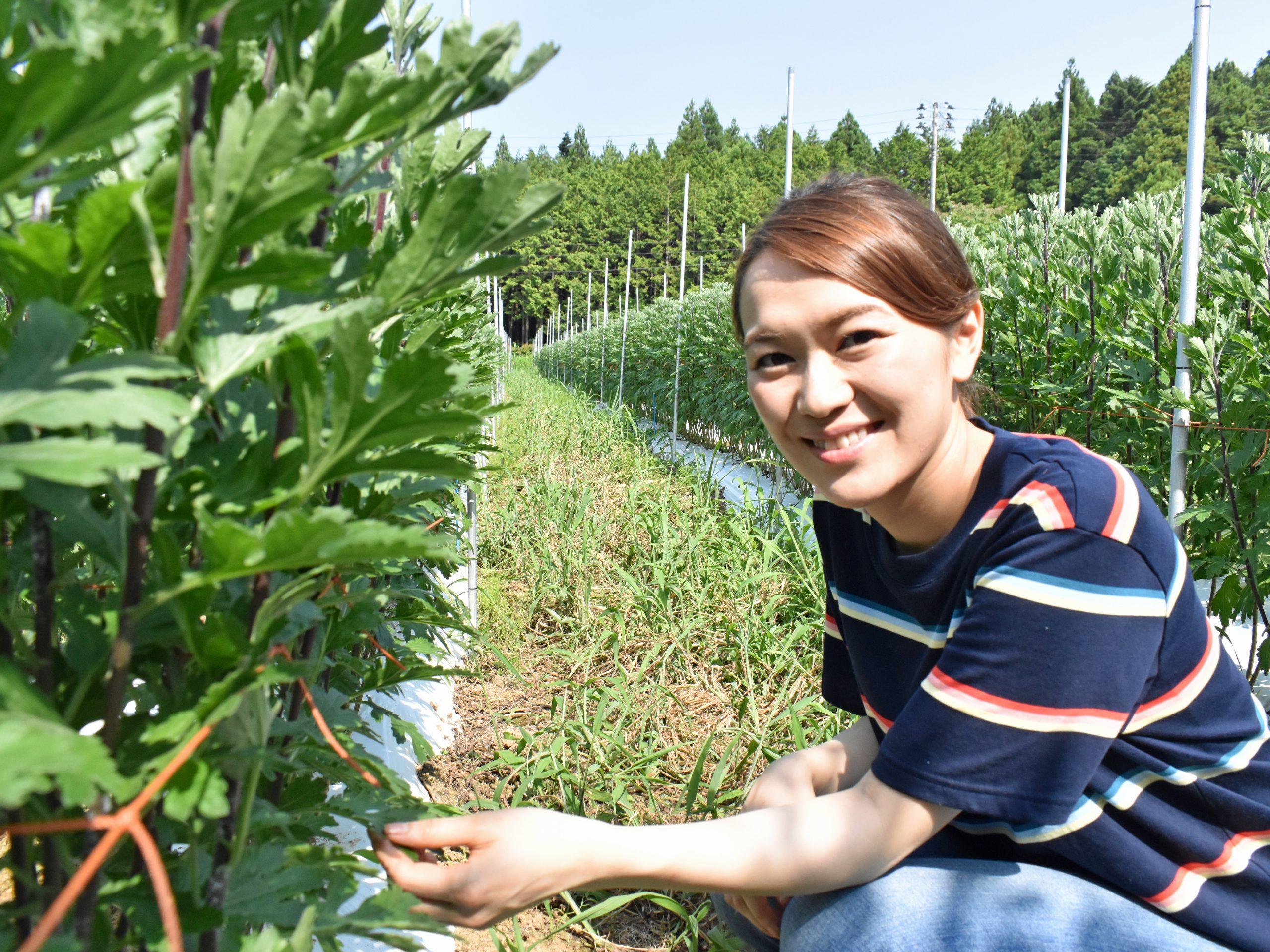 南相馬市小高区のほ場。栽培しているキクの前で今後の夢について語ってくれた菊地さん
