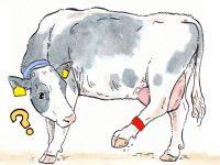 酪農漫画「うしだらけの日々」 第13話 出荷できない生乳