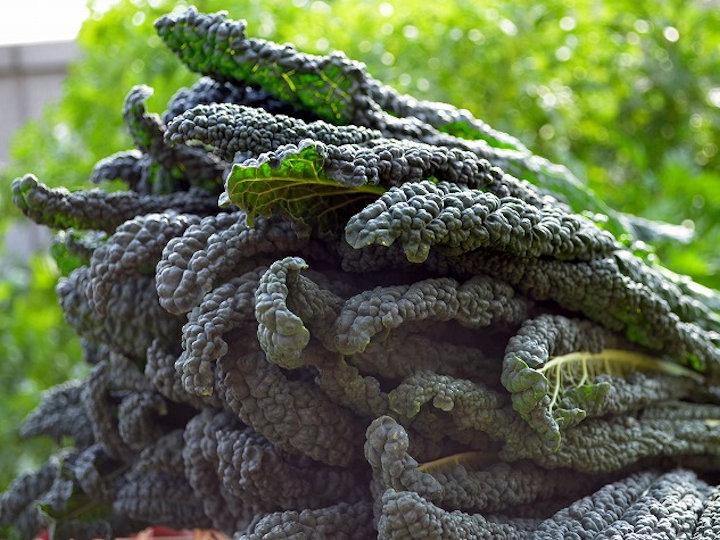 冬の間ずっと収穫できる西洋キャベツ「カーボロネロ」の魅力
