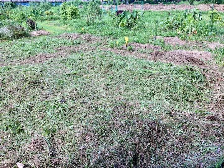 4)雑草マルチ