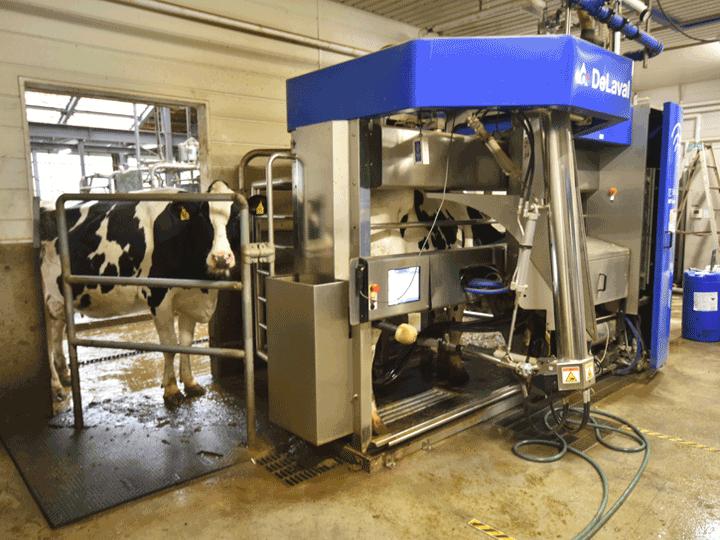 日本有数の酪農地帯で学ぶ!最新技術や遺伝子工学を取り入れた牧場スタイル