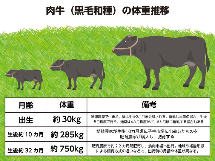 肉牛(黒毛和種)の体重推移