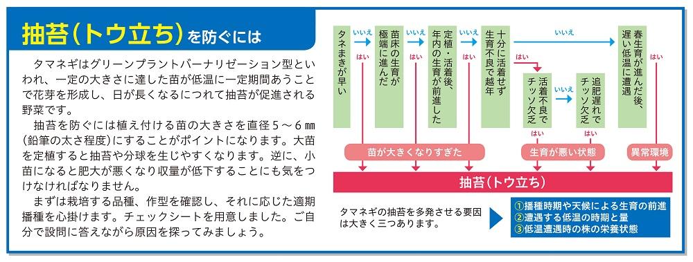 直売所出荷タマネギ-抽苔(トウ立ち)チャート