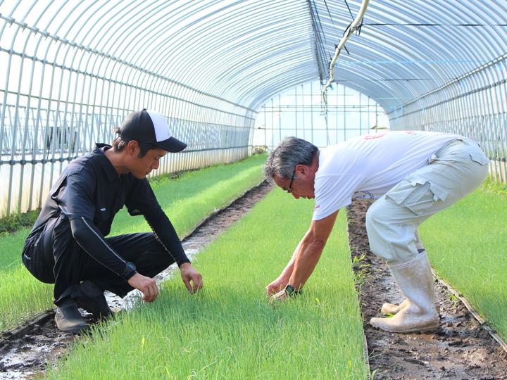 秋の定植に向け、タマネギ の苗の手入れ方法の指導を受ける鈴木さん。「惜しみなく知識や技術を教えてくれる社長は師匠のような存在です」