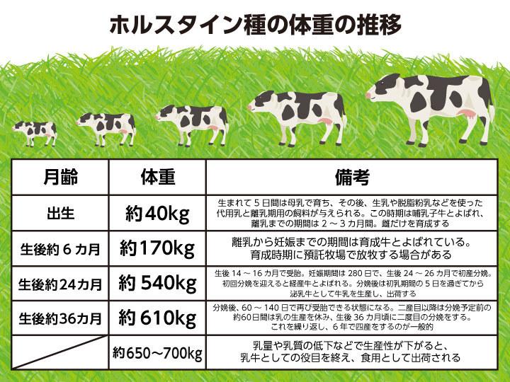 ホルスタイン種の体重の推移