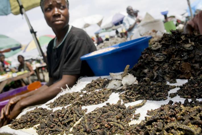 アフリカ・コンゴで昆虫を売る女性