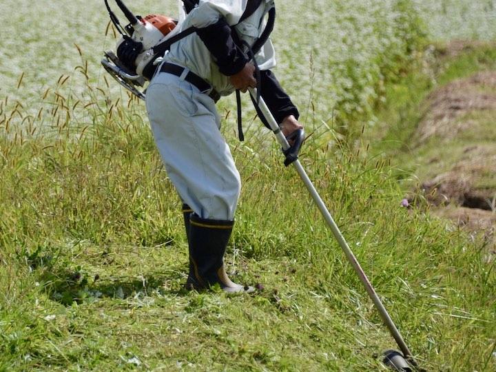 5)土手の草刈り 地下茎雑草