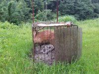 「心が折れる」鳥獣被害 猟友会のアドバイスで農家が箱わな設置!
