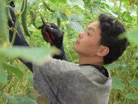"""就農2年目で農業収入1000万越えを実現! 福島県喜多方市の""""キュウリ""""でガッツリ稼ぐ農業、始めませんか?"""
