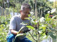 余計なものは一切使わない。あるがままの自然を尊重する農業経営の姿とは