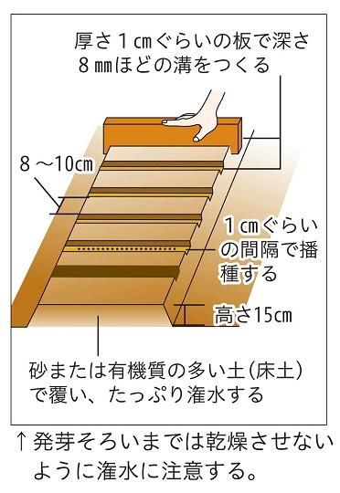 直売所出荷タマネギ-イラスト