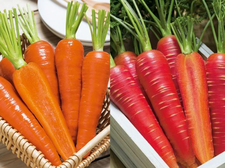 【プロに聞く】ニンジンの栽培方法とおすすめ品種 ポイントは土作り!