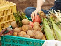 農業バイトについて3人の学生に聞いてみた!