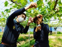 知識と技術を短期で修得。カスタム型のカリキュラムで、就農準備と両立できる島根県立農林大学校短期養成科に注目!