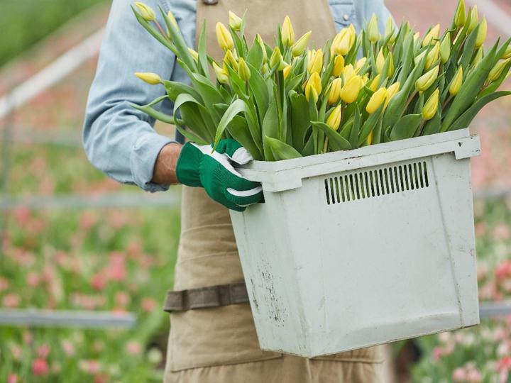花卉(かき)栽培とは?花卉栽培農家の仕事内容やスケジュール、将来性などについて