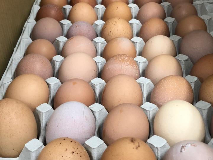 色や大きさが不ぞろいの卵