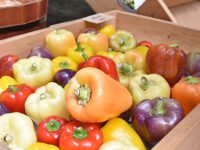 """生産者が誇りを持って売る―。『郡山ブランド野菜』発案者に聞く、農業の""""これから"""""""