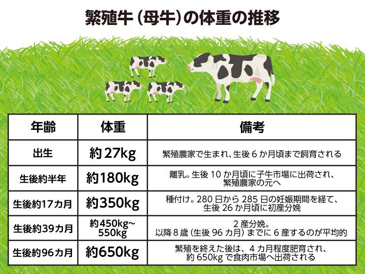 繁殖牛(母牛)の体重の推移