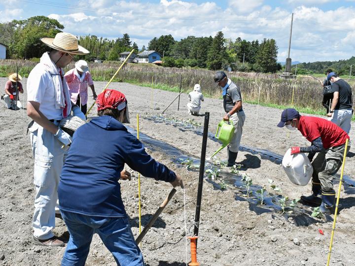 30度を超える炎天下の中、試験栽培のほ場で農作業を行う『両竹地区農地保全管理組合』のメンバー