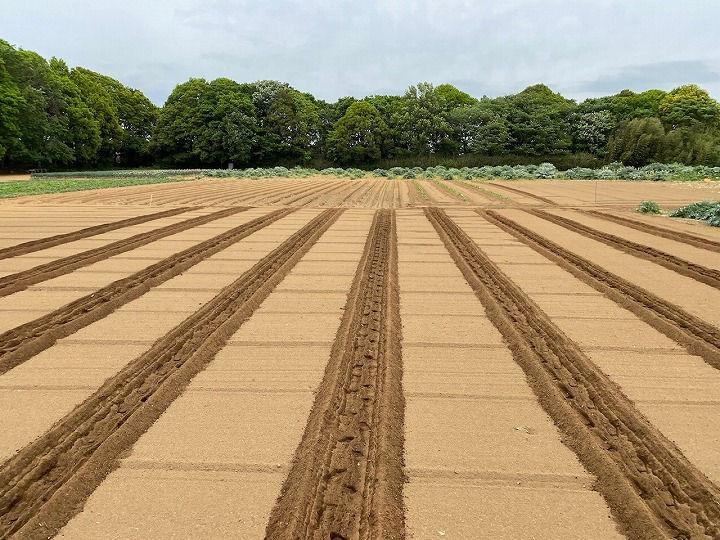 畑の使い方