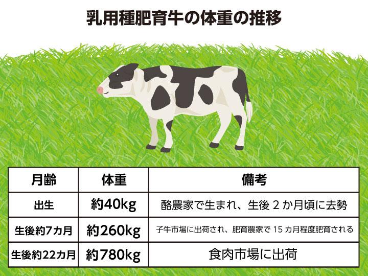 乳用種肥育牛の体重の推移
