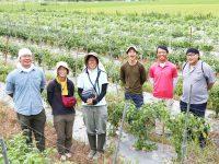 朝来市(あさごし)で農業研修を受けませんか―就農希望者への手厚いサポートと安定した販路を提供