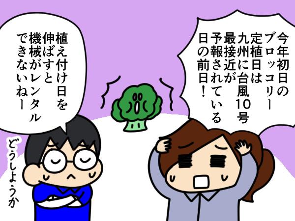 漫画「跡取りまごの百姓日記」【第76話】ブロッコリー定植のピンチを救ってくれたもの