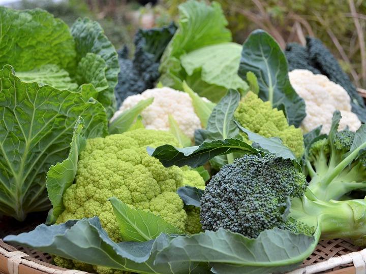 新規就農者必見!「西洋野菜の少量多品目栽培」で失敗しない方法