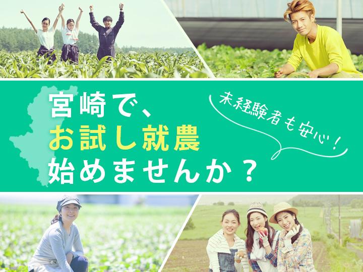 """【給与あり・最大3カ月】農業大国・宮崎で """"お試し就農"""" 始めませんか?"""